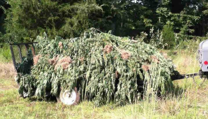 Marijuanapile